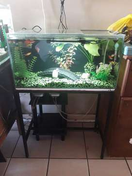 2ft Fishtank and stand