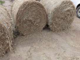 TEFF AND RHODES GRASS FOR SALE