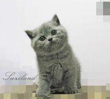 Элитные котята с документами.