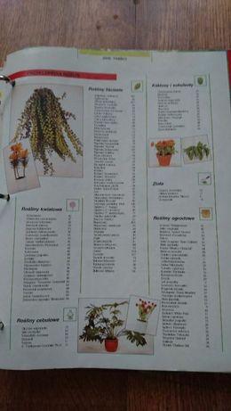 Magia roślin,wszystko o hodowli roślin w domu Piekary Śląskie - image 3
