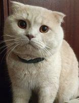 Кот вислоухий ищет кошечку