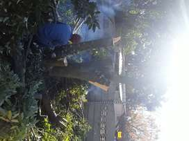Any Dae Gardening and Tree Felling