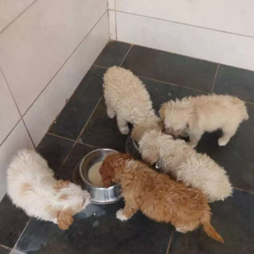 Buy any type of Dog  at an affordable Price 0
