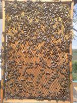 Продам бджолопакети 4 рр без хвороб та антибіотиків