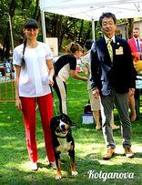 Дрессировка собак.Хендлер.Инструктора по вязке собак.