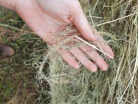 Teff and Eragrostis Bales Available!