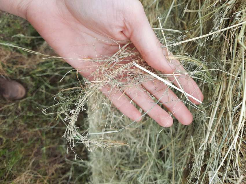Teff and Eragrostis Bales Available! 0
