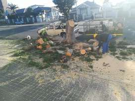 Tree Felling and Stump Removals