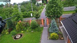 Окажу помощь в декоративном озеленении садовых участков