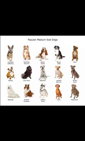 Looking for a medium sized dog