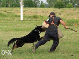 Дрессировка собак!!!