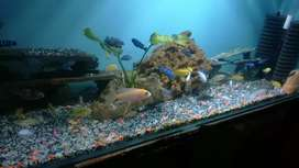 Fresh water fish forsale