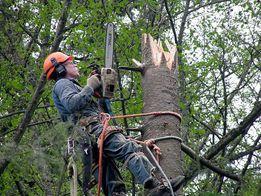 Срез аварийных деревьев, Арборист. Высотные роботы, альпинизм