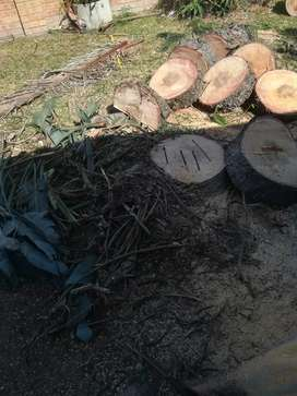 Tree Felling and Removals