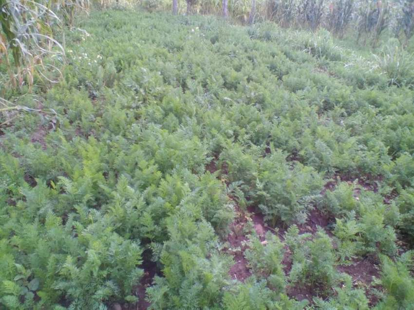 Kipipiri, Wanjohi, Near Happy Valley one acre agricultural land 0