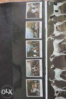 Zestaw znaczków pocztowych z Anglii
