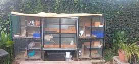 Bunny Cages & breeding pairs