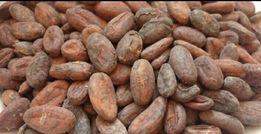 какао бобы сырые (необжареные ) урожай 2018ганна и кот дивуар