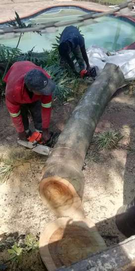 4 Brother's Tree Felling