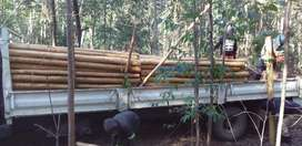 TREATED GREEN POLES AND CREOSOTE