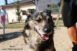 Byron - nieśmiały psiak szuka domu