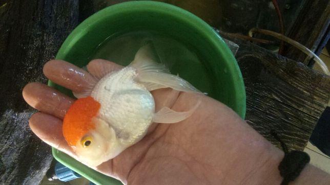 аквариумные рыбки, растения, оборудование,зоомагазин аквариумистики Харьков - изображение 4