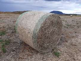 Soya Bales for sale