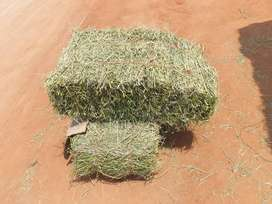 Lucerne for sale (Sereni) Makonde na Thengwe
