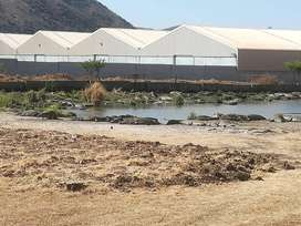 Crocodile farms for sale