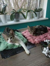 Legowisko dla kota psa rożowe i miętowe z wełny . 35x50cm hand made.