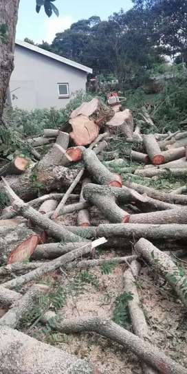 4 Brothers Tree Felling