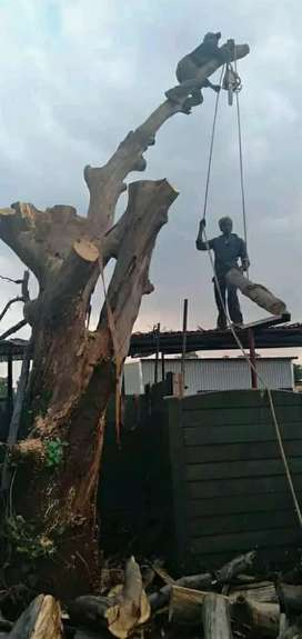 A-M Garden Service and Tree felling