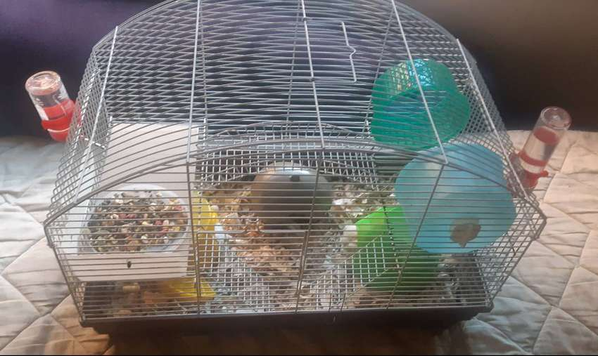 Cage with two dwarf hamsters 0