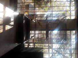 Large parrot cage for sale