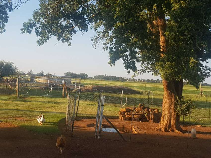 4.2ha Smallholding in Waterbron for sale 0