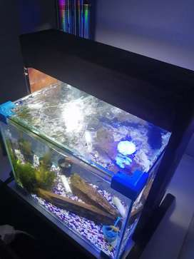 30L fishtank with 4 fish and lots of accessories