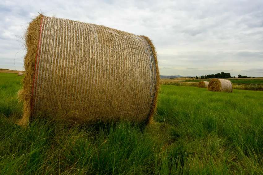 Bales for sale 0