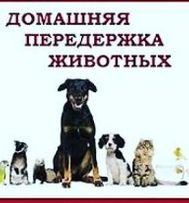 """ПЕРЕДЕРЖКА! Услуга домашней гостиницы""""MOOR-MOOR CAT""""для котиков и др!"""