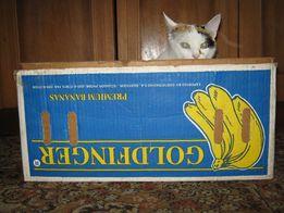 Продам ящик банановый