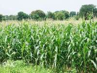 Plot Of Land For Sale!! 0