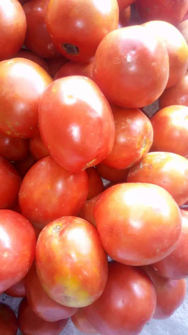 Tomatoes, 10/= each 0