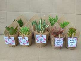 Succulent Favours Wrapped in Hessian
