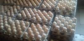 Free range double yorke Eggs at R75
