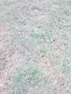 Vacant land for sale, Springs Grootvlei Estate