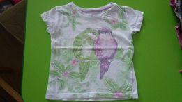 Cool Club bluzka krótki rękaw papugi 92