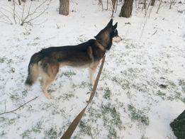 Выгул собак почасово и передержка мелких животных