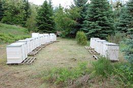 Опыление растений пчёлами в Киевской области, 50 пчелосемей