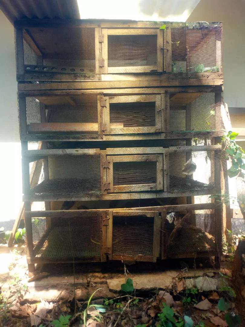 Battery cage for quels and hens 0