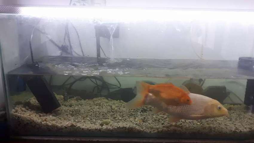 3 foot fish tank for sale and comes with 2 foot tank for free 0