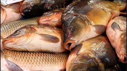 Живая рыба от производителя продам